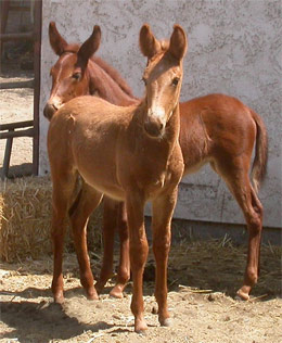 Foals Fmisht and Cavort