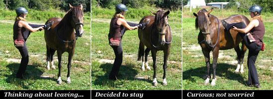 Poetica Demonstrating Horse Behavior
